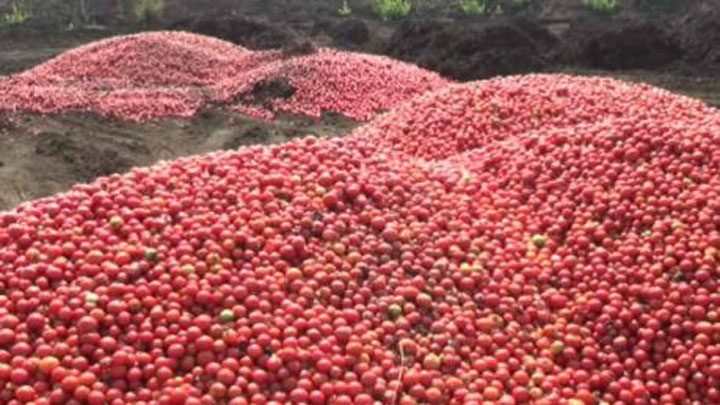 tomatoes-on-road