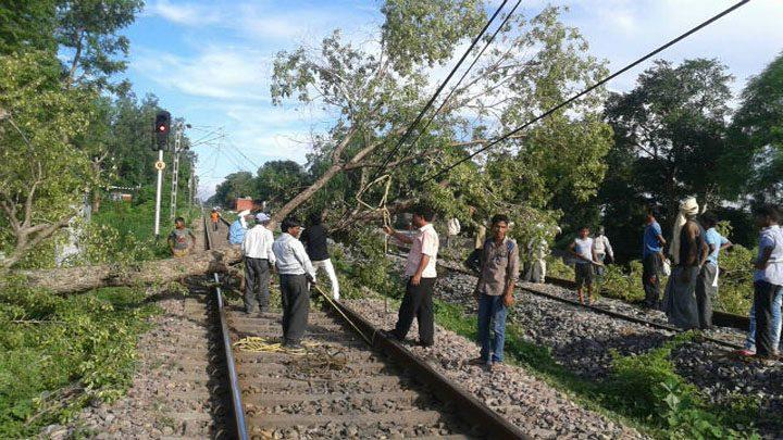 tree-fell-on-the-railway-track