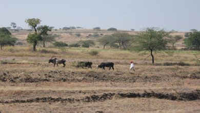 Dhamtari district declared drought-prone