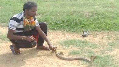 snake-catcher