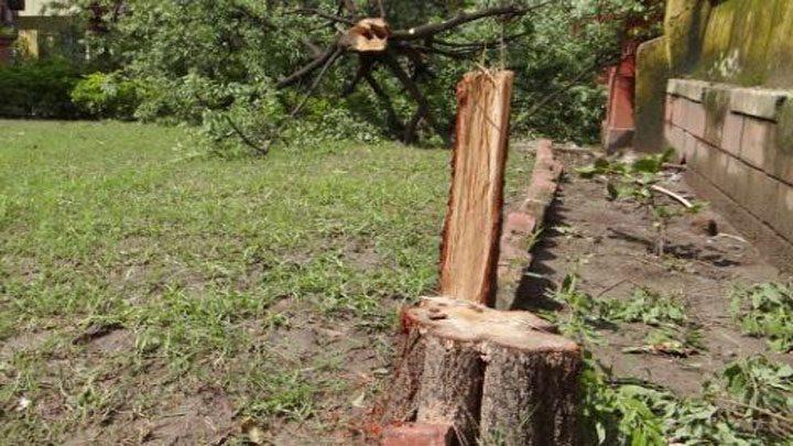 smuggling-of-sandalwood-trees