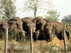 हाथी ले दहशत