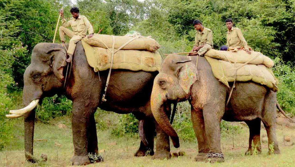 Question on utility of kumki elephants